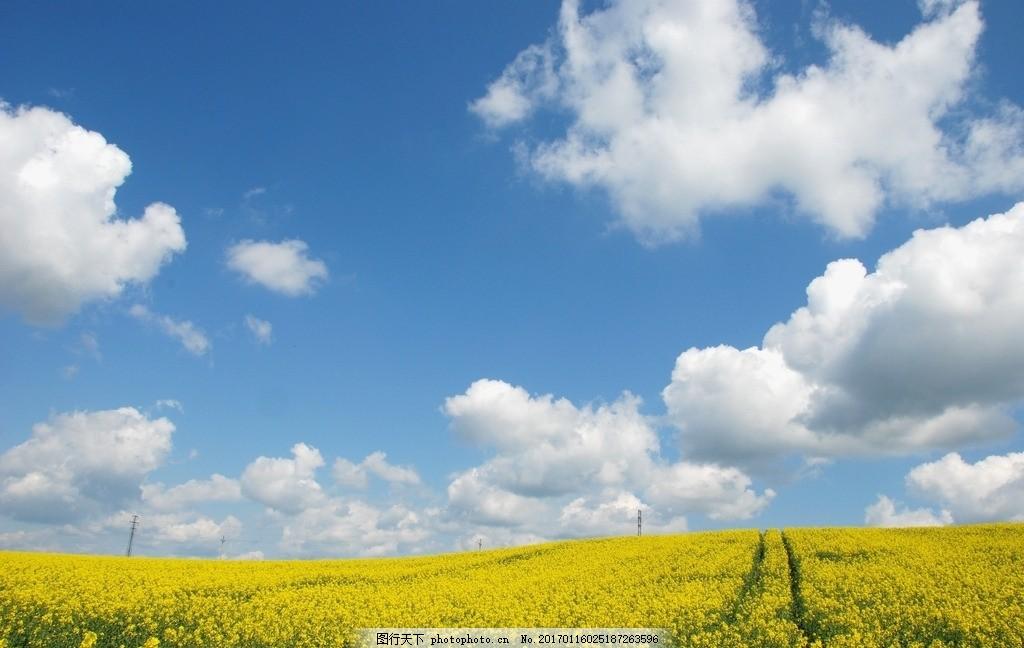 蓝天白云草地高清图片下载 秀丽风景 高清风景 大图 木板 木材