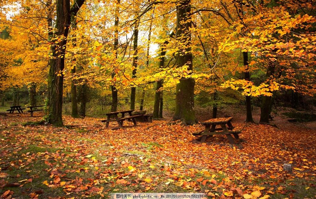 秋天的风景高清 高清图片 秋景 枫树 红叶 黄色 枯叶 落叶 枫林