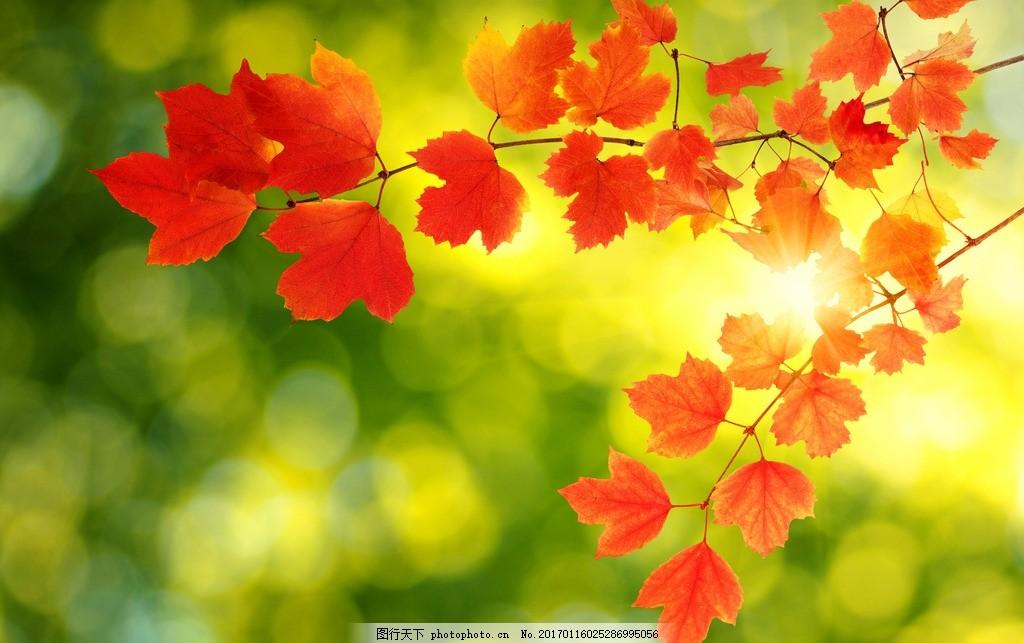 秋天的风景高清