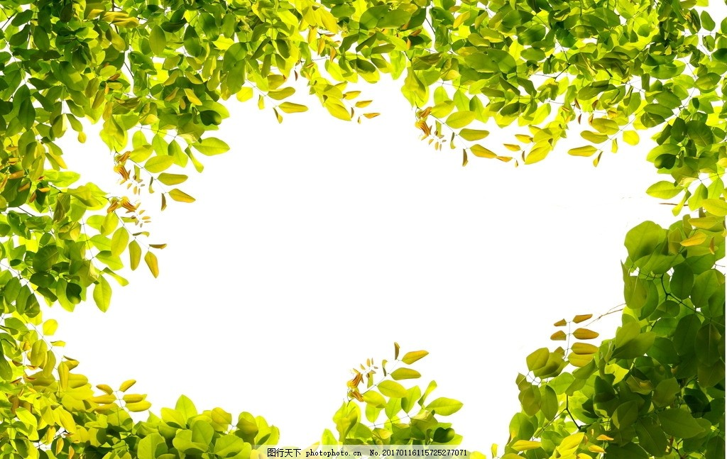 树叶草地背景高清 高清图片 绿叶 植物 光圈 清新背景 底纹边框