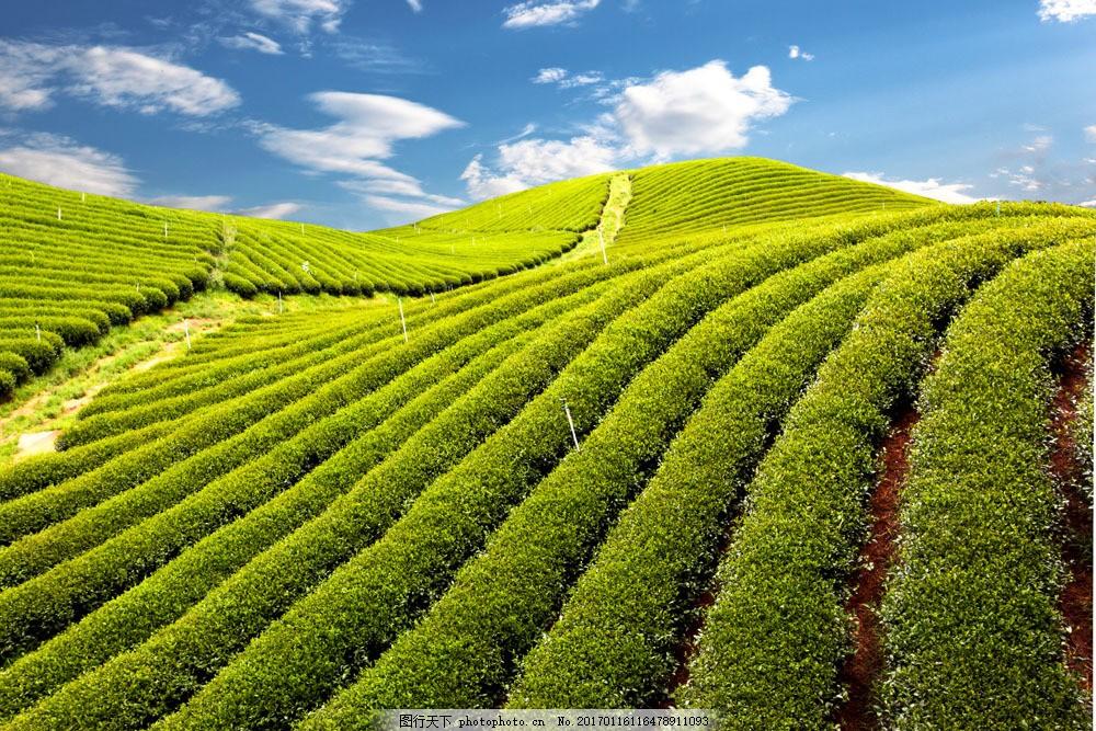 绿色田园风景图片