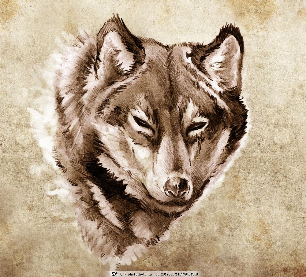 狼素描插画 狼素描插画图片素材 素描画 铅笔画 绘画艺术 抽象插画