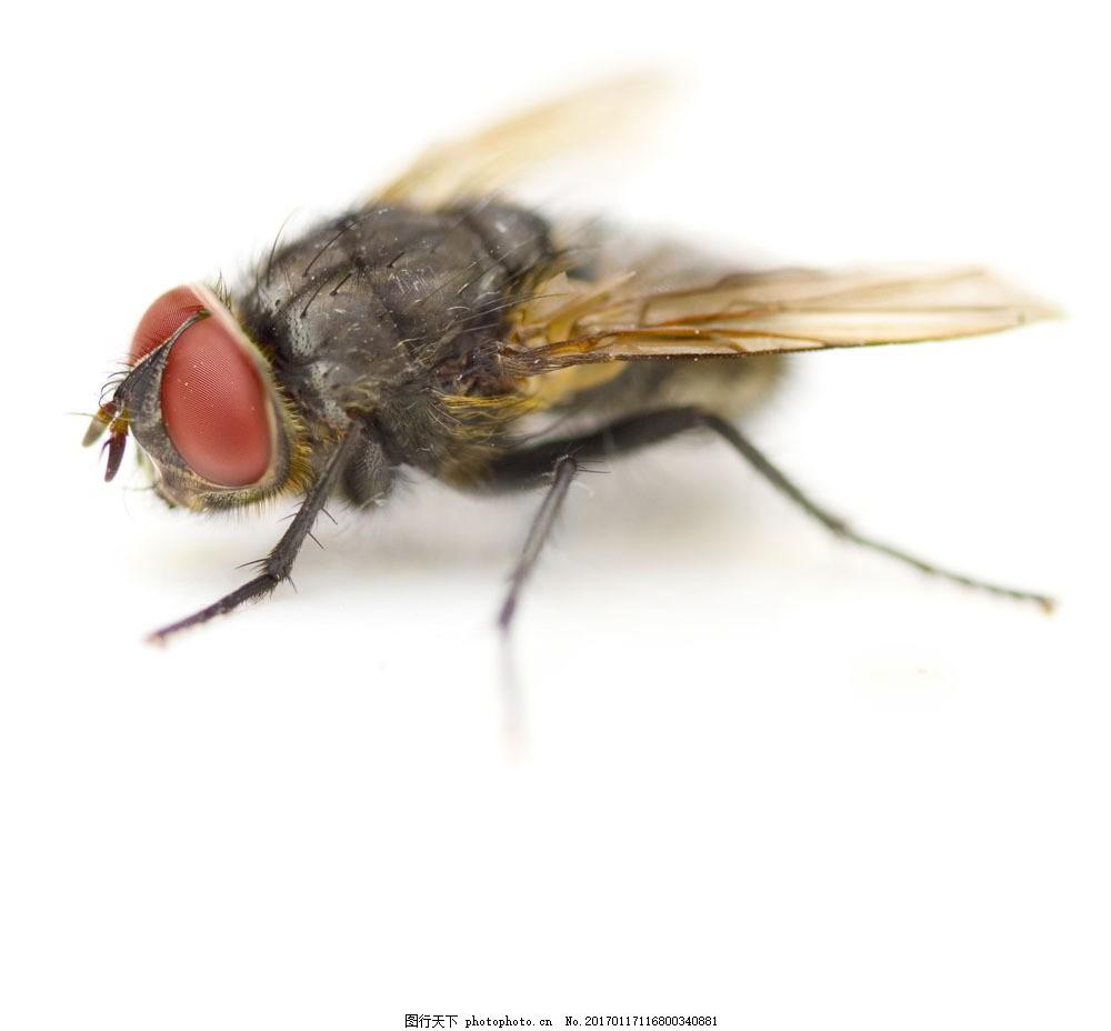 苍蝇 苍蝇图片素材 动物世界 昆虫 害虫 动物摄影 昆虫世界 生物世界