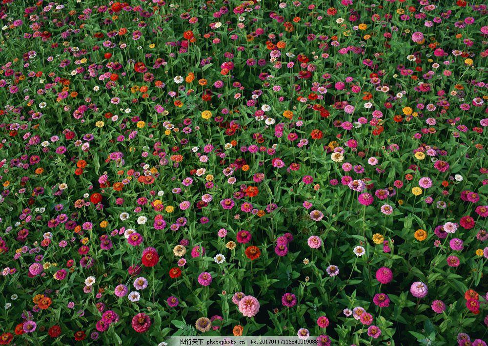 花卉风景 花卉风景图片素材 自然风景 花草 生物世界 鲜花 花海
