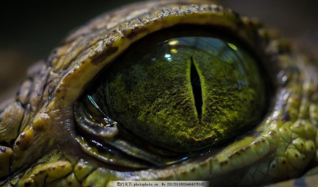 鳄鱼眼睛 冷血动物 爬行动物 肉食性动物 食肉动物 凶猛 血盆大口