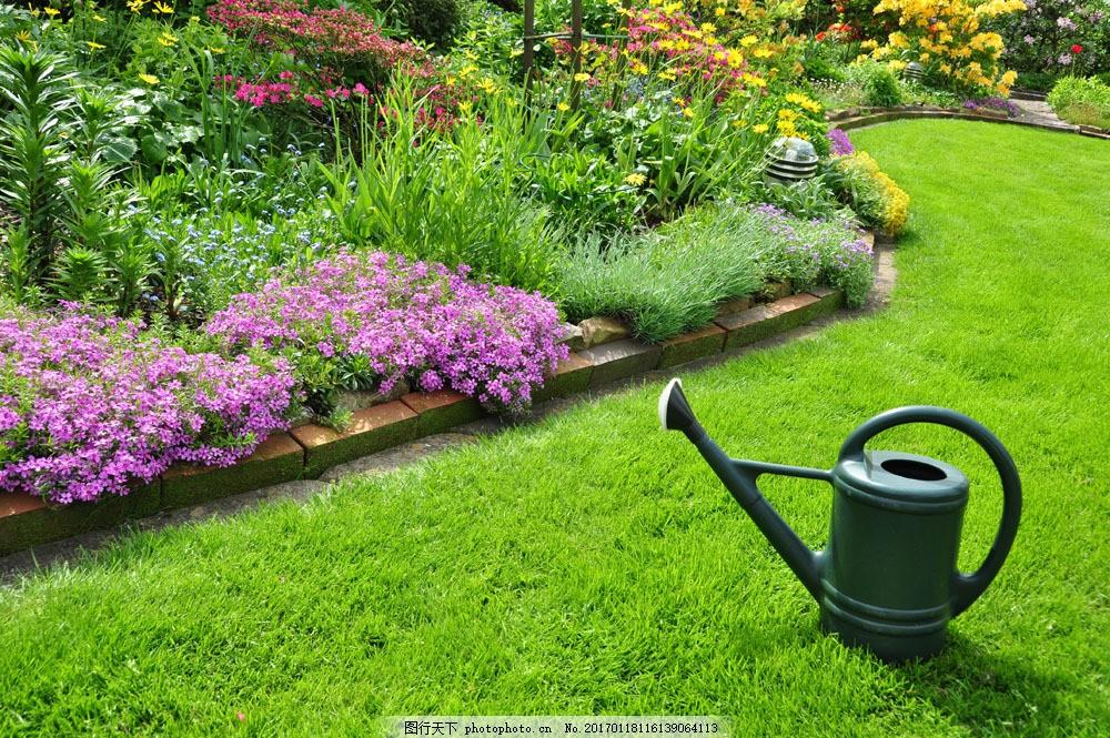 美丽鲜花草坪风景图片