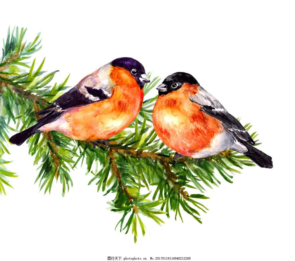 水彩情侣鸟图片素材 情侣鸟 枝条 小鸟 空中飞鸟 鸟类 飞鸟 禽类 动物