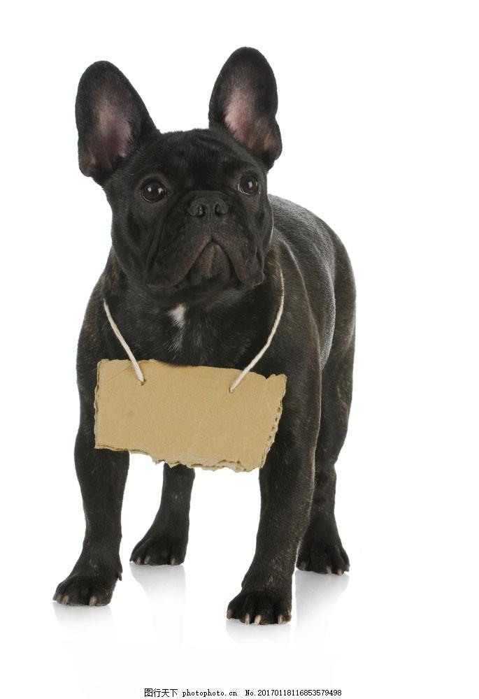 狗狗与广告牌 狗狗与广告牌图片素材 可爱狗狗 宠物狗 小狗 可爱动物