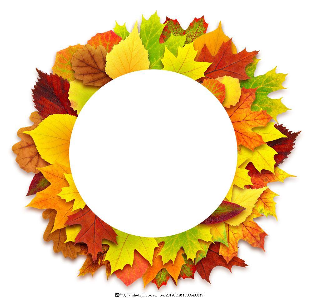 树叶边框背景 树叶边框背景图片素材 秋天树叶 树叶摄影 植物 低纹