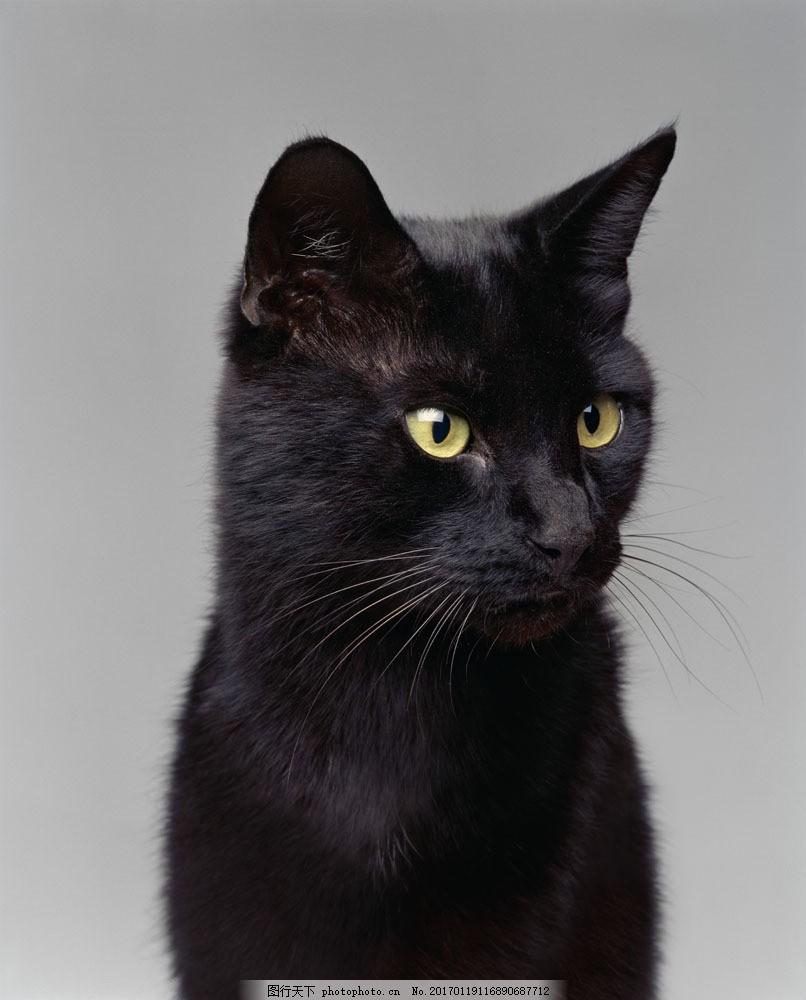 黑猫图片素材 猫 狗 小狗 宠物狗 宠物 小狗素材 小狗摄影 动物 可爱