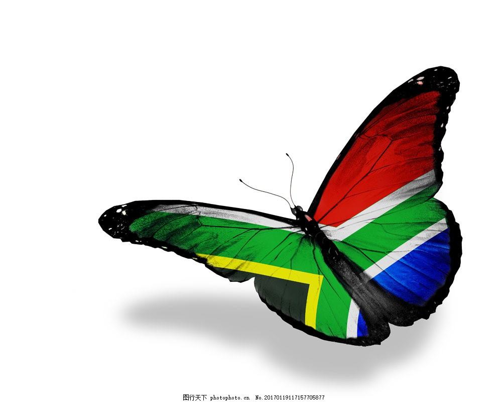 南非国旗蝴蝶 南非国旗蝴蝶图片素材 美丽蝴蝶 漂亮蝴蝶 昆虫动物