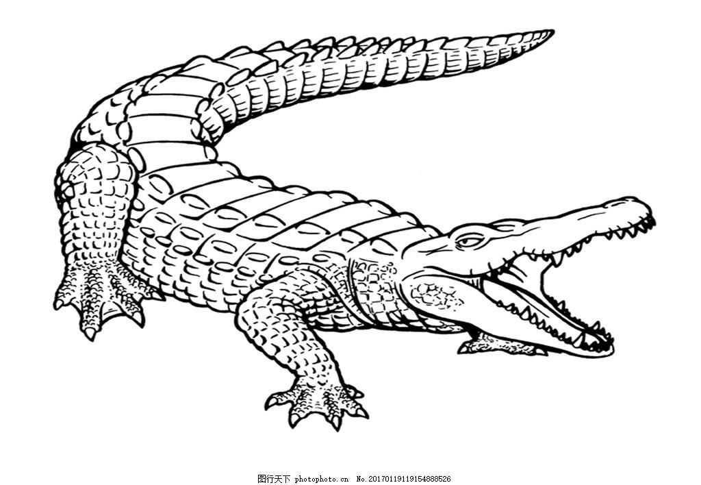 手绘鳄鱼 凶猛 鳄鱼素描 动物素描 鳄鱼插画 冷血动物 爬行动物