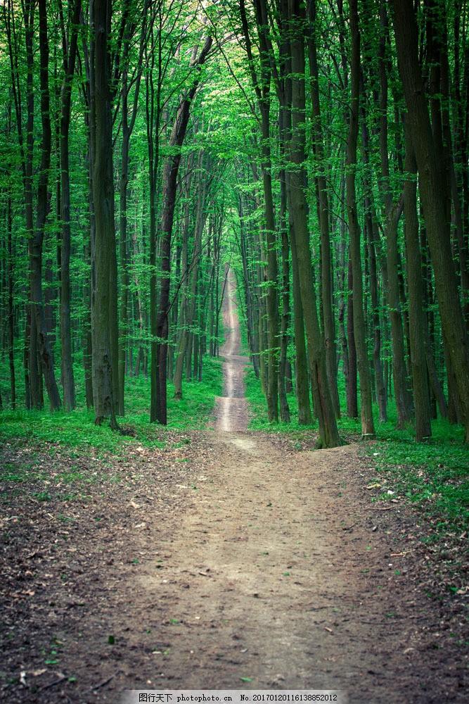美丽林间小路风景 树林风景 林间小路风景 道路风景 美丽风景 树木