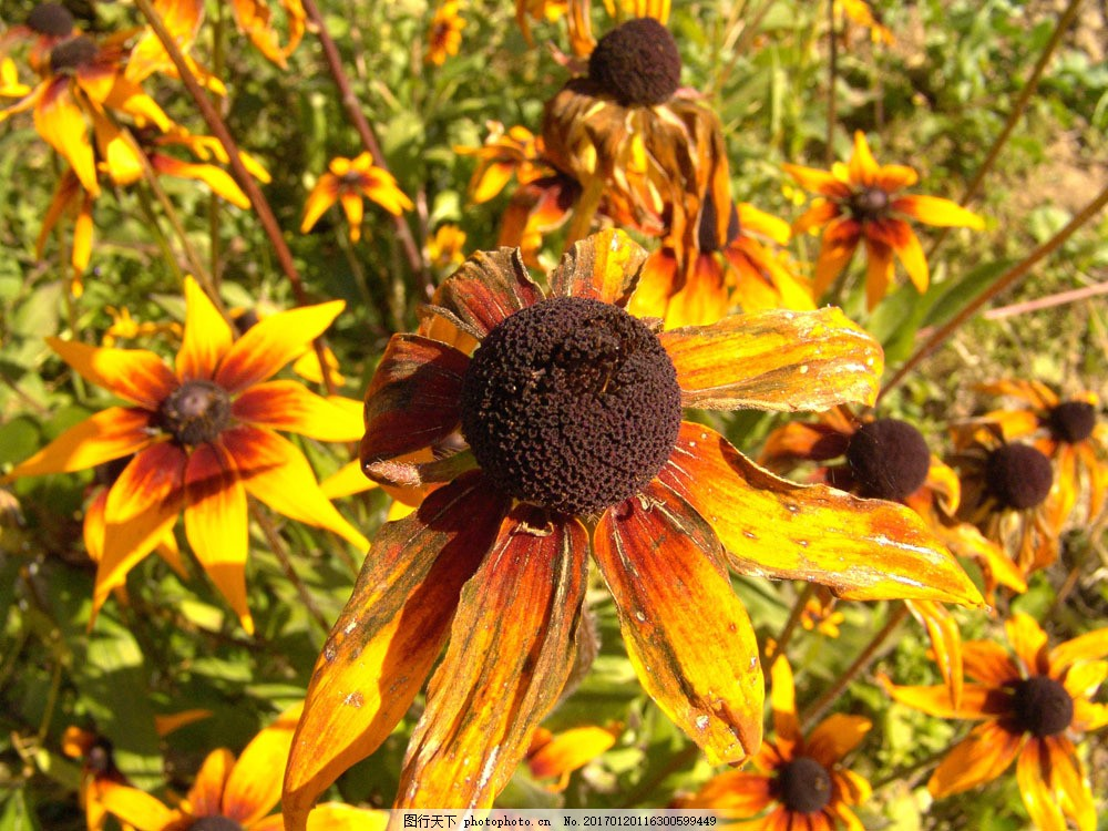 蓝天下的鲜花图片素材 鲜花 花朵 蓝天 天空 秋季风景 秋天风景 美丽