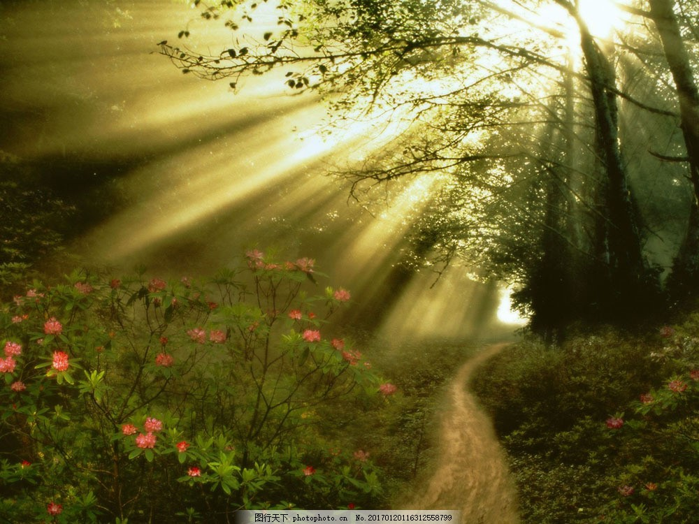 清晨林间小路风景 清晨林间小路风景图片素材 早晨 朝霞 阳光 树林
