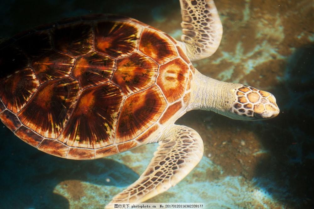 海龟摄影 海龟摄影图片素材 海底世界 海洋生物 生物动物 水生物