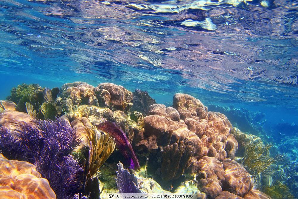 水下的珊瑚和植物图片素材 植物 水下 海底 礁石 珊瑚 水下摄影 海底