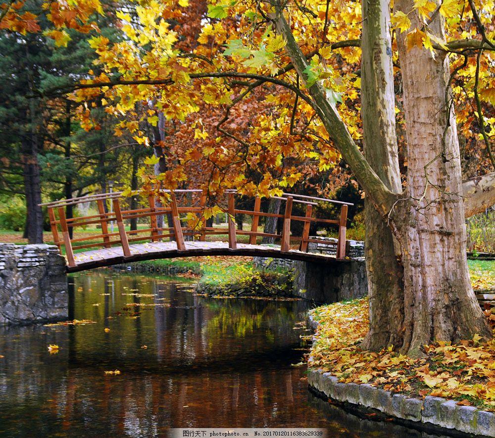 秋天 落叶 林间小道 小路 金花色的树叶 自然 景色 小桥 山水风景