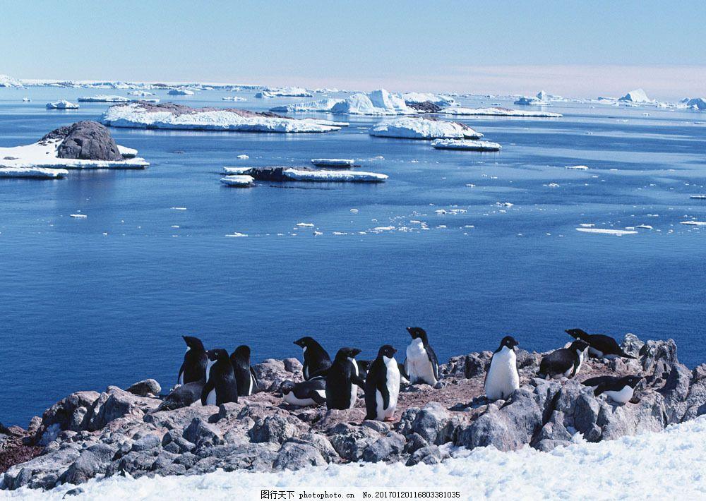 南极企鹅摄影 南极企鹅摄影图片素材 动物世界 生物世界 南极生物