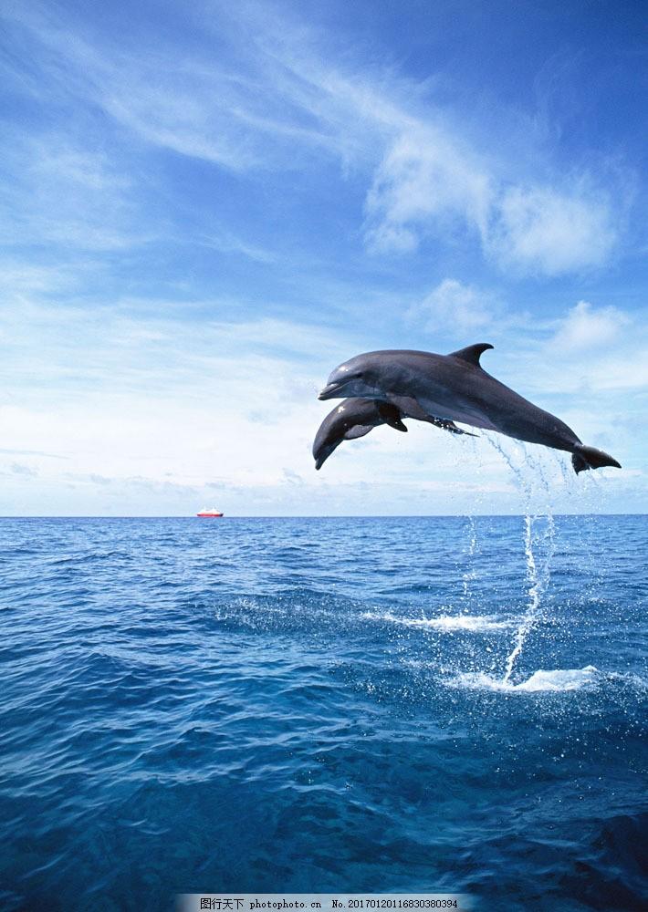 海面上的海豚 海面上的海豚图片素材 动物世界 生物世界 海底生物