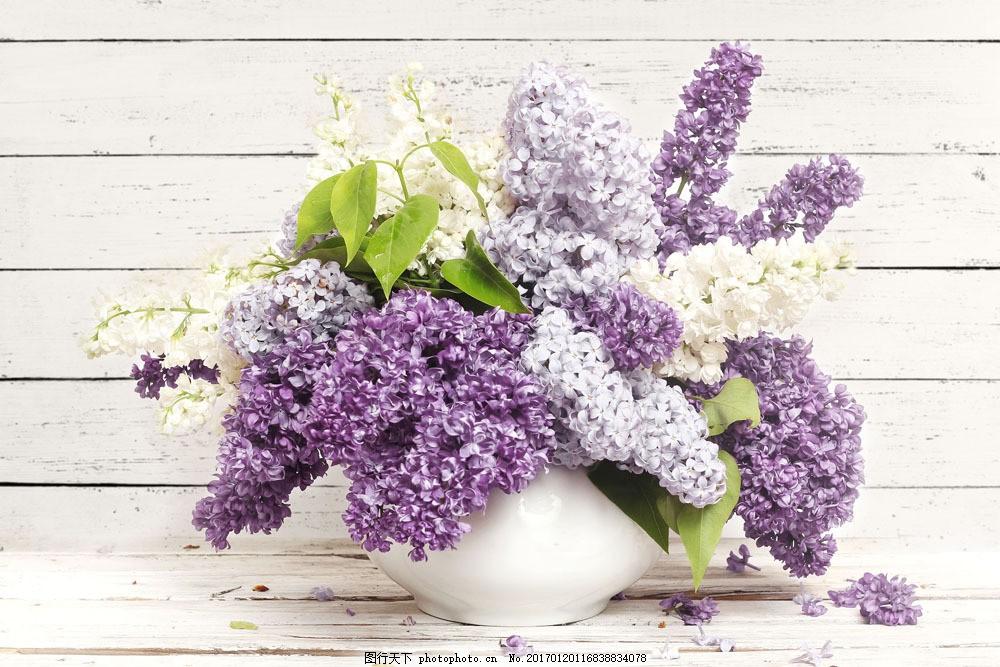 绣球花花瓶图片