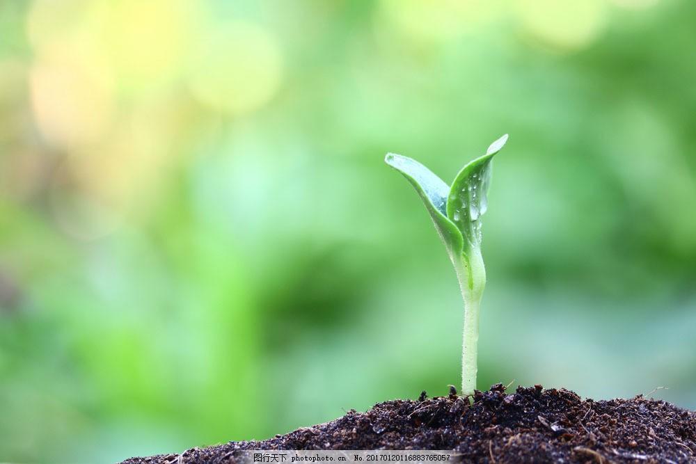 土壤里的幼苗 土壤里的幼苗图片素材 植物生长 新芽 泥土 绿芽