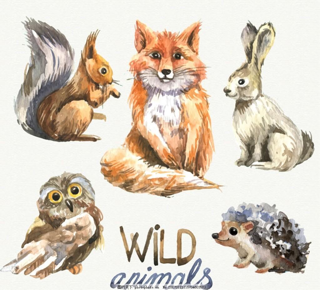 5款水彩绘野生动物矢量素材 鸟 野兔 松鼠 狐狸 猫头鹰 刺猬
