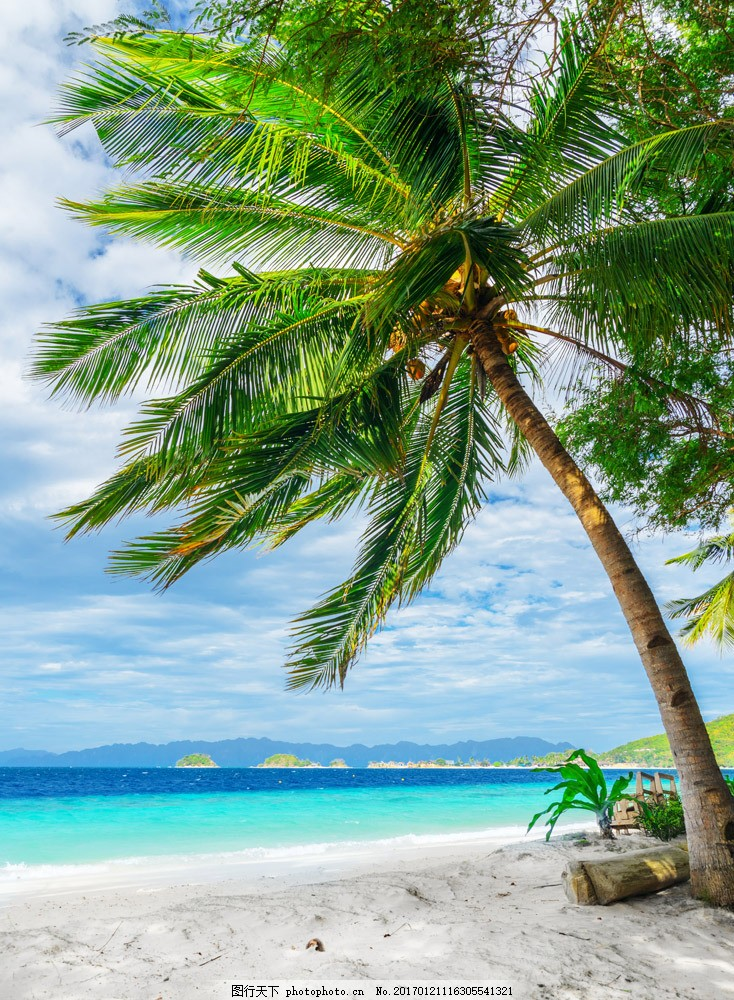 美丽海滩椰树风景图片素材 椰树 蓝天白云 沙滩风景 海滩风景 美丽