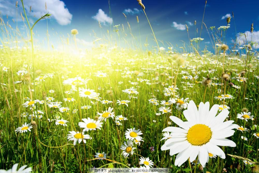 图片 横构图 春天风景 春天气息 绿色 清新 草绿 花朵 野花 大自然 阳