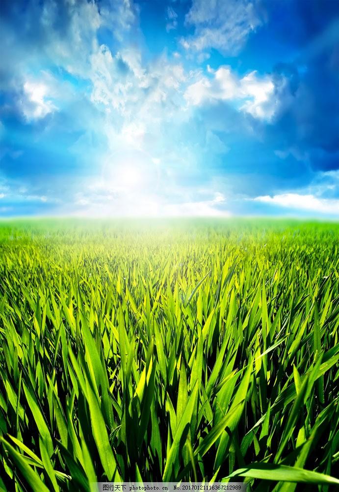 蓝天白云 草地 绿地 青草 草原风景 美丽风景 山水风景 风景图片 图片