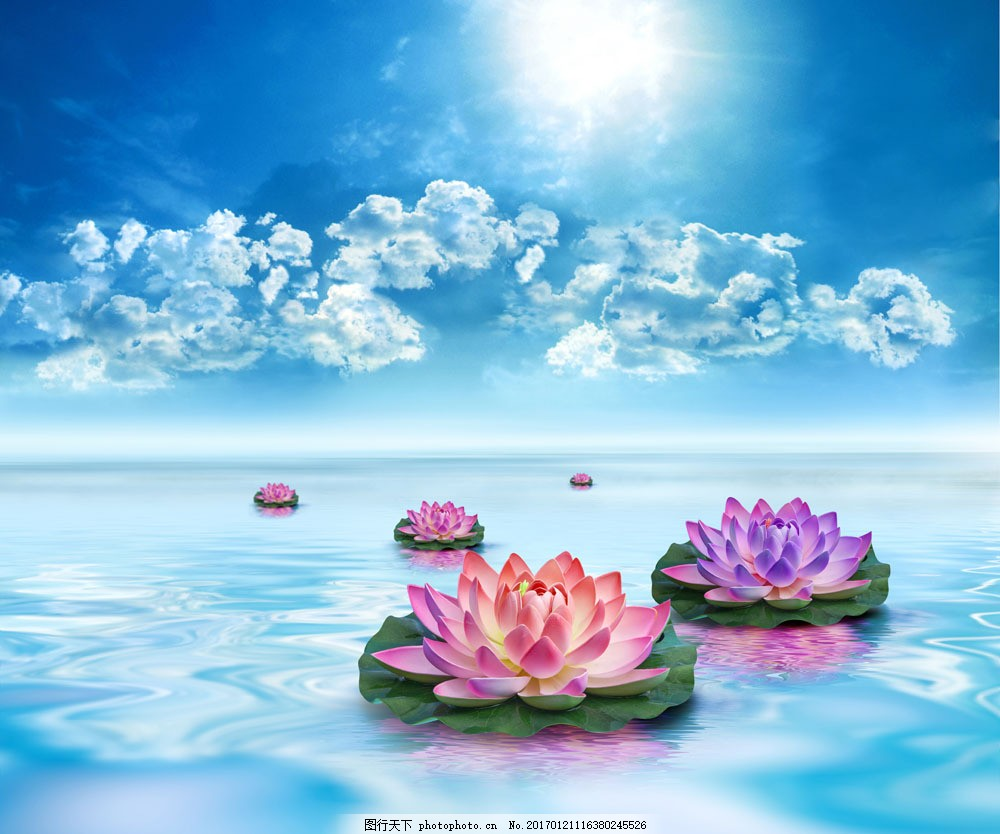 蓝天白云与荷花 蓝天白云与荷花图片素材 莲花 美丽鲜花 花朵 水面