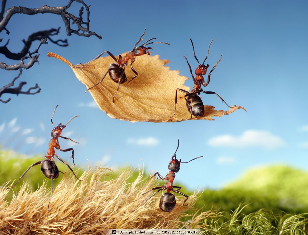 树叶上的蚂蚁 树叶上的蚂蚁图片素材 野草 蓝天 白云 动物 昆虫世界