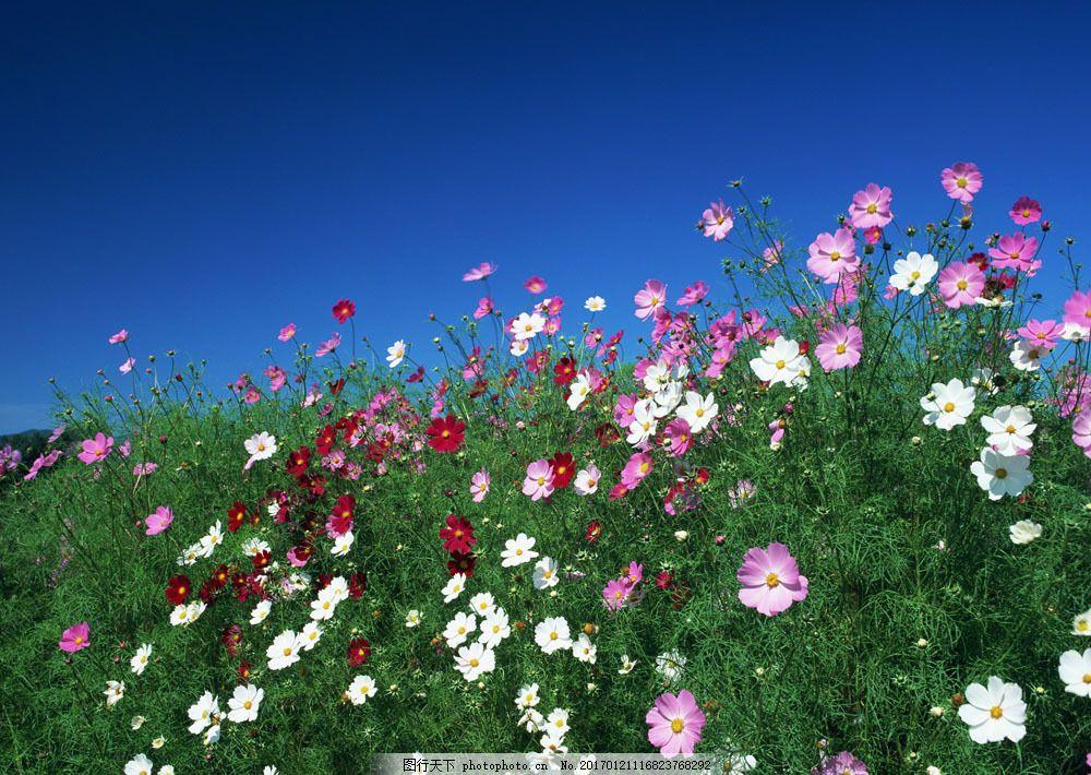 绿草与野花 绿草与野花图片素材 花卉 自然风景 花草 生物世界