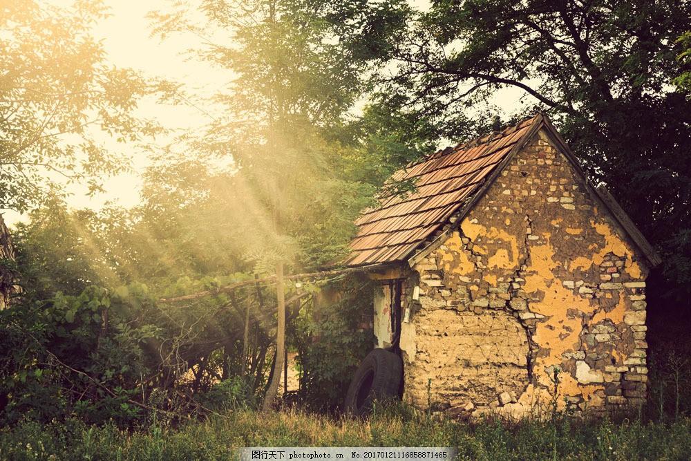 破旧房屋大树图片