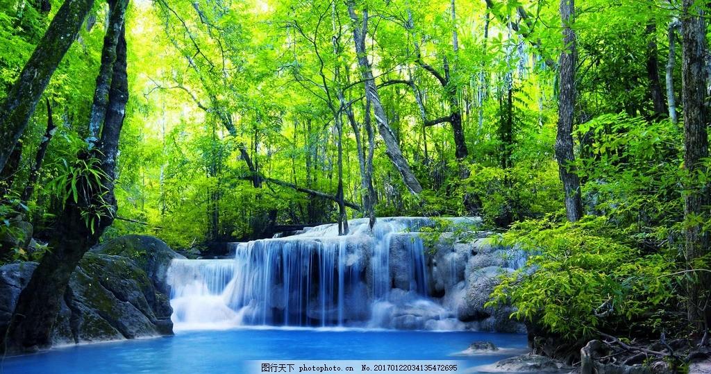 森林 夏季 夏天 夏季风景 树木 绿叶 绿树成荫 夏季景色 摄影