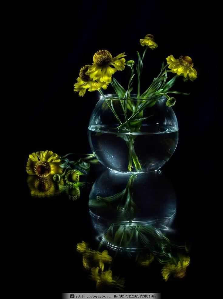 静物花 摄影 高清 黑色背景 花 花瓶 摄影 生物世界 花草 240dpi jpg