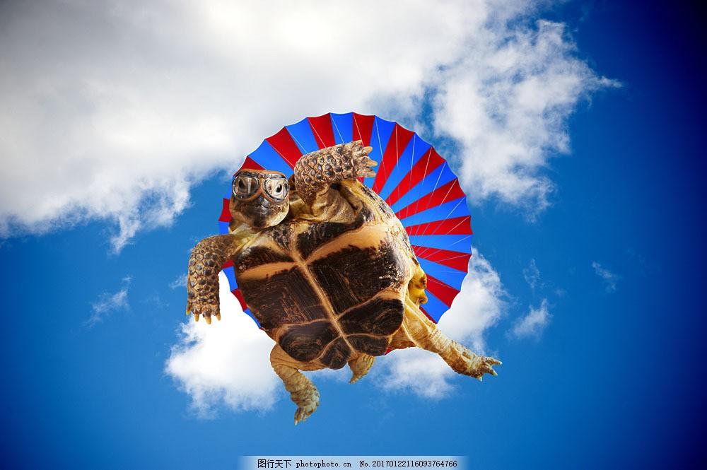 跳伞的乌龟 跳伞的乌龟图片素材 蓝天白云 降落伞 跳伞运动 动物