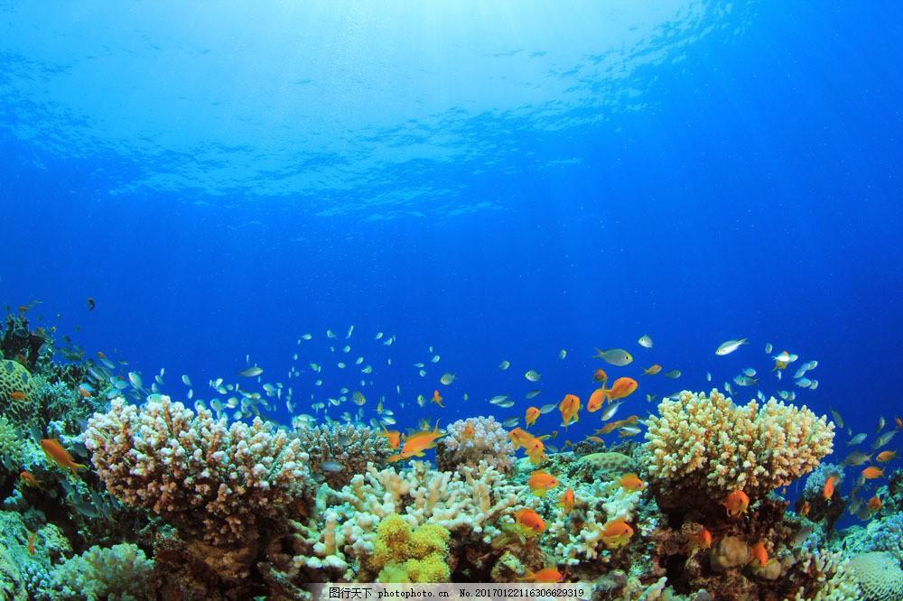鱼群 水下 海底 礁石 珊瑚 水下摄影 海底 大海图片 风景图片 图片
