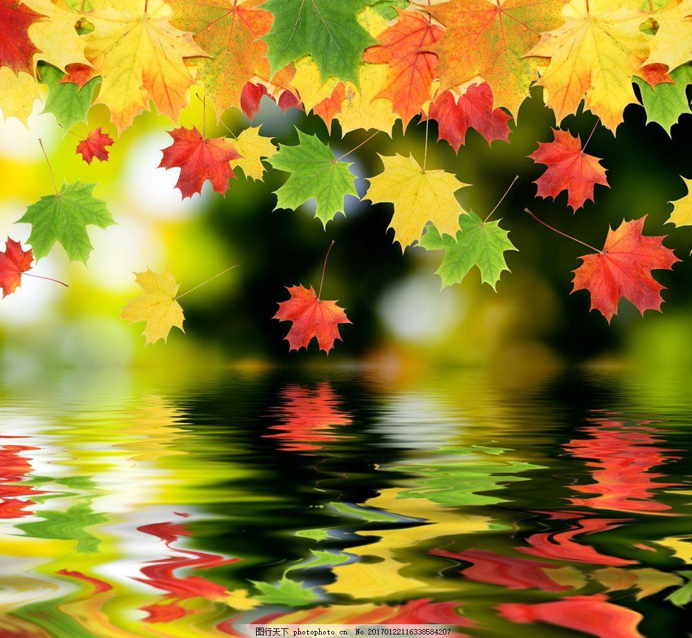 漂落的枫叶美景 漂落的枫叶美景图片素材 秋天风景 美丽风景 树叶