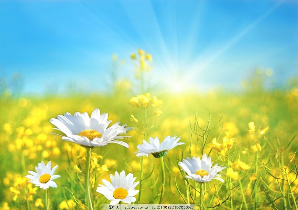高清植物摄影图片素材 花朵 鲜花 天空 自然风景 景区 景观 休闲旅游