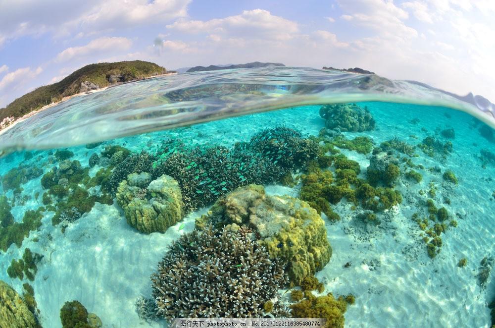 水下摄影图片素材 水下 海底 礁石 珊瑚 水下摄影 海底 大海图片 风景