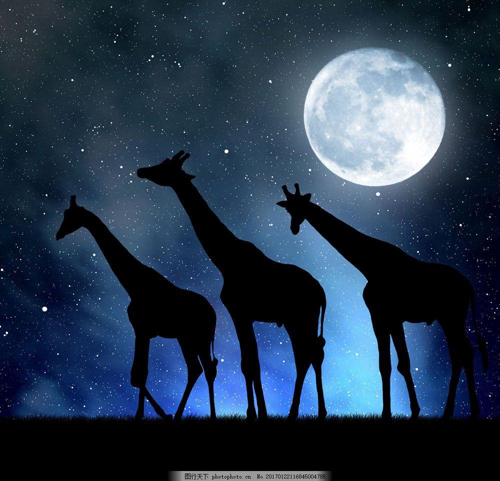 夜空下的长颈鹿 夜空下的长颈鹿图片素材 夜晚 月亮 星空 动物