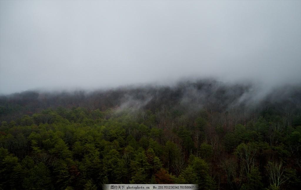 俯视云雾弥漫的森林 俯视 云雾弥漫的 森林 树林 远视 大雾 上雾 风景