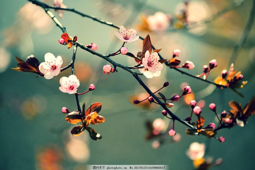梦幻美丽桃花背景图片素材 桃花 鲜花 花树 花朵 植物 花枝 梦幻背景