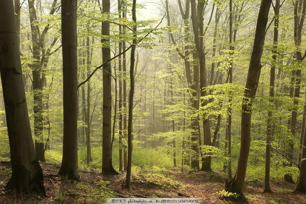 美丽森林风景图片素材 树木风景 树林风景 自然美景 森林风景 美丽