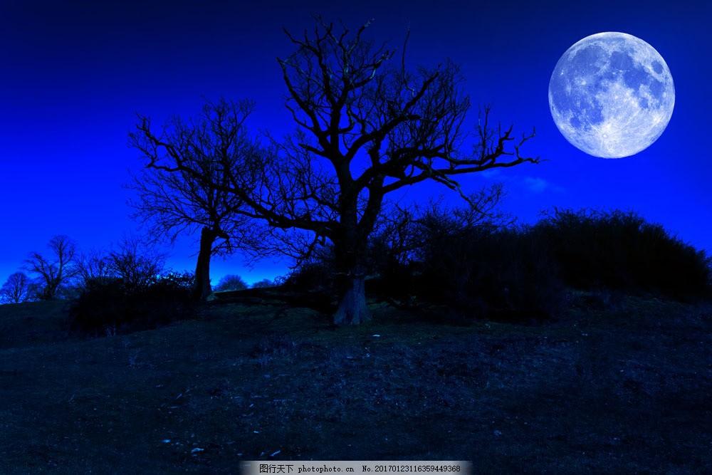 恐怖的夜晚图片图片素材 森林 夜晚 圆月 万圣节背景 万圣节 夜景