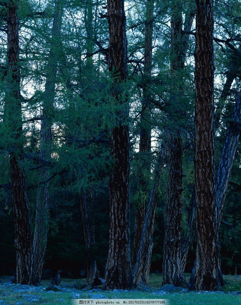 森林树木摄影 森林树木摄影图片素材 大自然 美丽风景 美景 景色