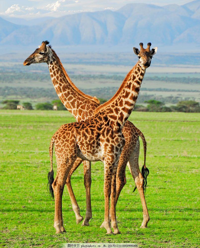 [转载]一组珍贵世界野生动物摄影作品赏析