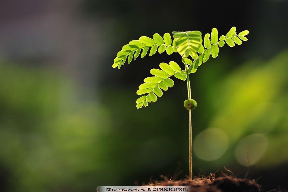 土壤里的幼苗 土壤里的幼苗图片素材 植物 花草树木 树林 土地