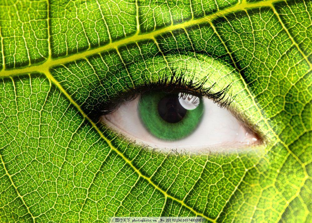 树叶上的眼睛图片